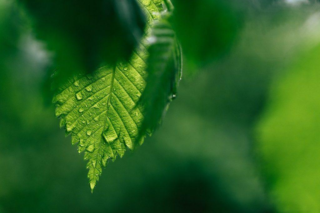 leaf, drip, green
